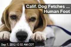 Calif. Dog Fetches ... Human Foot