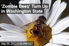 'Zombie Bees' Turn Up in Washington State