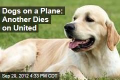 Dogs on a Plane: Another Dies on United