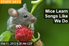 Mice Learn Songs Like We Do