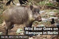 Wild Boar Goes on Rampage in Berlin