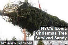NYC's Iconic Christmas Tree Survived Sandy