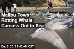 Malibu Tows Rotting Whale Carcass Out to Sea