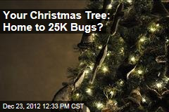 Your Christmas Tree: Home to 25K Bugs?
