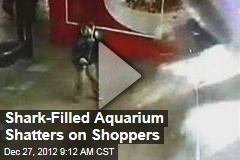 Shark-Filled Aquarium Shatters on Shoppers
