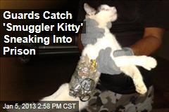 Guards Catch 'Smuggler Kitty' Sneaking Into Prison