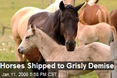 Horses Shipped to Grisly Demise