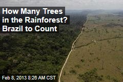 How Many Trees in the Rainforest? Brazil to Count