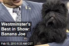 Westminster's Best in Show: Banana Joe