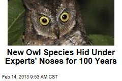 New Owl Species Hid Under Experts' Noses for 100 Years