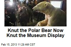 Knut the Polar Bear Now Knut the Museum Display
