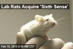 Lab Rats Acquire 'Sixth Sense'