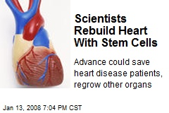 Scientists Rebuild Heart With Stem Cells