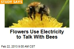 Flowers Use Electricity to Talk With Bees