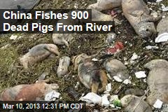 China Fishes 900 Dead Pigs From River