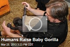 Humans Raise Baby Gorilla