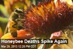 Honeybee Deaths Spike Again
