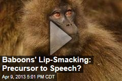 Baboons' Lip-Smacking: Precursor to Speech?