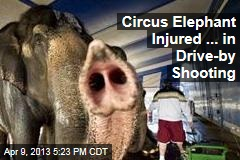 Circus Elephant Injured ... in Drive-by Shooting