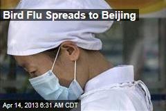 Bird Flu Spreads to Beijing