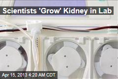 Scientists 'Grow' Kidney in Lab