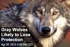 Gray Wolves Likely to Lose Federal Protection