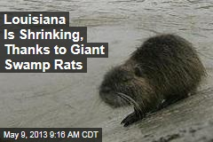 Louisiana Is Shrinking, Thanks to Giant Swamp Rats