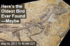 Here's the Oldest Bird Ever Found —Maybe