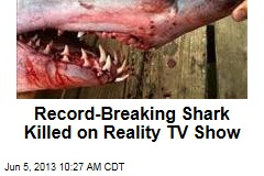 Record-Breaking Shark Killed on Reality TV Show