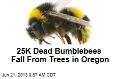 25K Dead Bumblebees Fall From Trees in Oregon