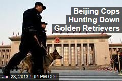 Beijing Cops Hunting Down Golden Retrievers
