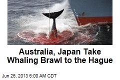 Australia, Japan Take Whaling Brawl to the Hague