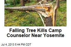 Falling Tree Kills Camp Counselor Near Yosemite