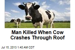man-killed-when-cow-crashes-through-roof - Cows are more dangerous than sharks - Facts and Trivia