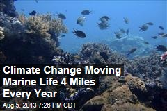 Climate Change Moving Marine Life 4 Miles Every Year