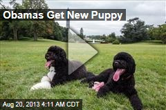 Obamas Get New Puppy