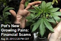 Pot's New Growing Pains: Financial Scams