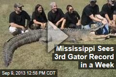 Mississippi Sees 3rd Gator Record in a Week