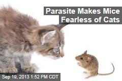Parasite Makes Mice Fearless of Cats