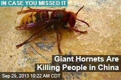 Giant Hornets Are Killing People in China