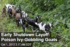 Early Shutdown Layoff: Poison Ivy-Eating Goats