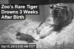 Zoo's Rare Tiger Drowns 3 Weeks After Birth