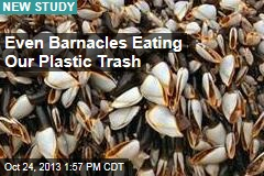 Even Barnacles Eating Our Plastic Trash