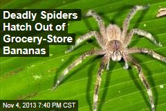 Deadly Spiders Hatch Out of Grocery- Store Bananas