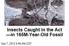 Insects Caught in the Act —in 165M-Year-Old Fossil