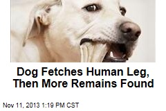 Dog Fetches Human Leg, Then More Remains Found