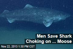 Men Save Shark Choking on ... Moose