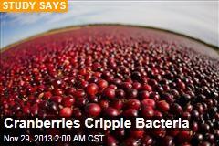 Cranberries Cripple Bacteria