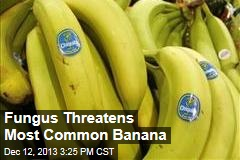 Fungus Threatens Most Common Banana