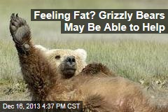 Feeling Fat? Grizzly Bears May Help With Obesity